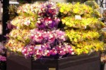 Front view of 2X3 open wrap floral display case by Borgen
