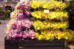 Side view of 2X3 open wrap floral case - Borgen Merchandising Systems